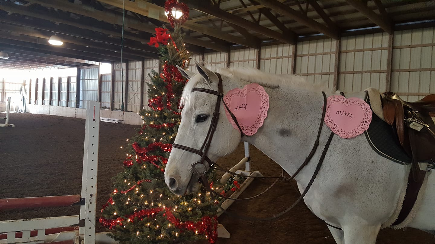 Valentines Day Horse 2019